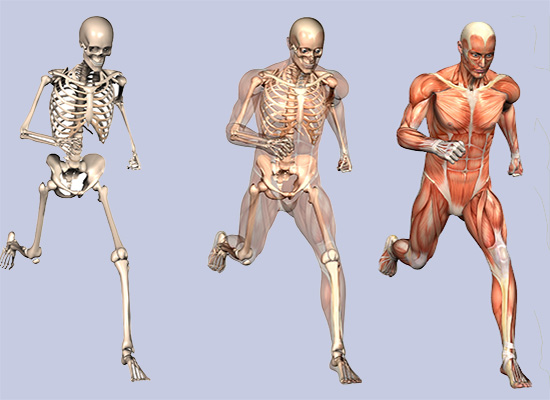 Orthopedic Treatment & Rehabilitation